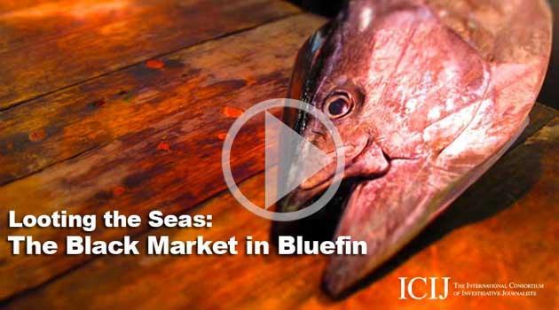 dead bluefin