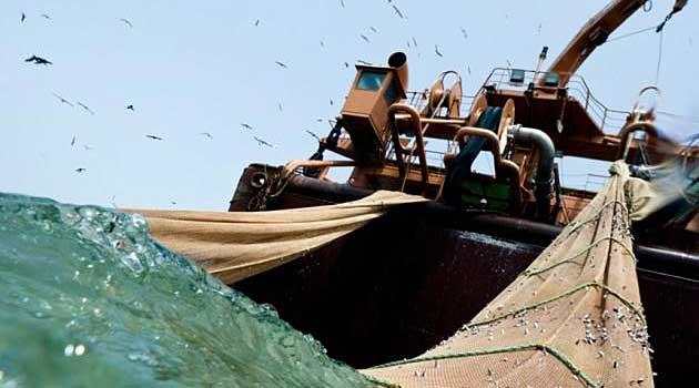The Willem van der Zwan is one of 25 EU-flagged vessels represented by the Dutch-based Pelagic Freezer-trawler Association