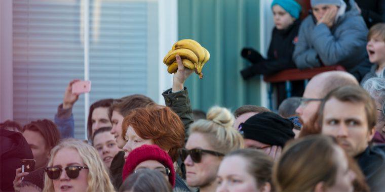 People bring bananas to a protest against Icelandic prime minister Sigmundur Davio Gunnlaugsson.